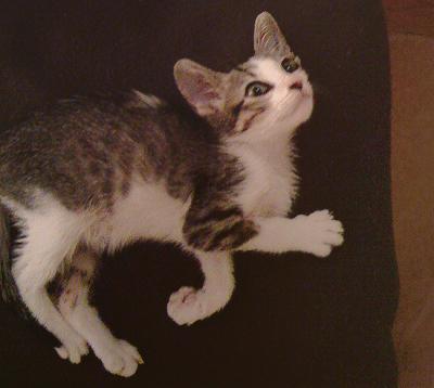 Kitten a few days after